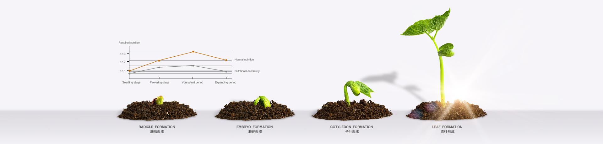 巴西蒙戈叶面肥植物营养理念