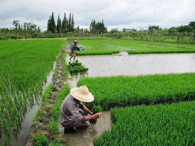 中国农民总结的种地顺口溜,太强大了(以色列卡希诺智能肥)