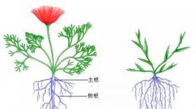 根生则生,根亡则亡,养根护根很重要!6个动作让蔬菜高产!(卡希诺)