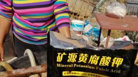 矿源黄腐酸钾火爆走红,为什么#矿源黄腐酸钾市场效应这么好?真相在这里!